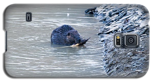 Beaver Chews On Stick Galaxy S5 Case by Chris Flees