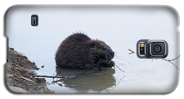 Beaver In The Shallows Galaxy S5 Case by Chris Flees