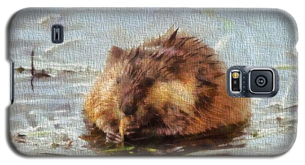 Beaver Portrait On Canvas Galaxy S5 Case by Dan Sproul
