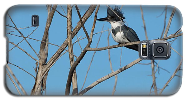 Belted Kingfisher 4 Galaxy S5 Case by Ernie Echols