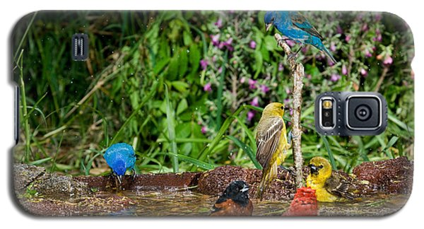 Birds Bathing Galaxy S5 Case by Anthony Mercieca