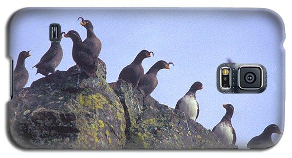 Birds On Rock Galaxy S5 Case by F Hughes