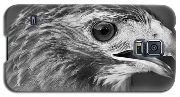 Black And White Hawk Portrait Galaxy S5 Case by Dan Sproul