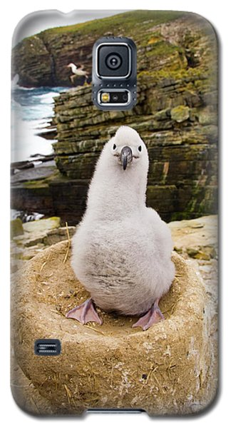 Black-browed Albatross Chick Falklands Galaxy S5 Case by