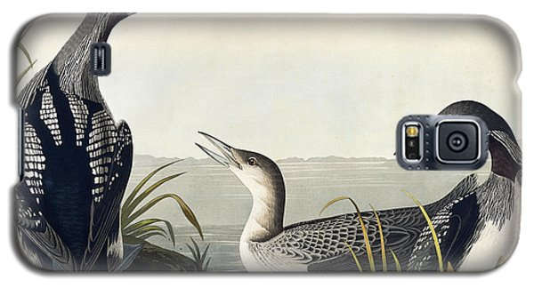 Black Throated Diver  Galaxy S5 Case by John James Audubon