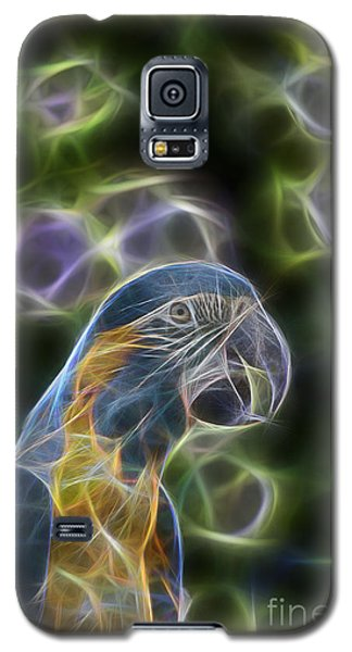 Blue And Gold Macaw  Galaxy S5 Case by Douglas Barnard