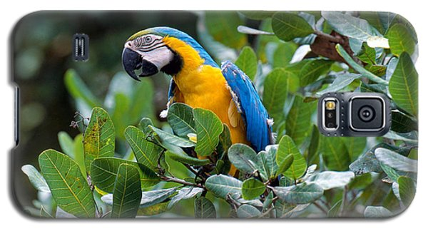 Blue And Yellow Macaw Galaxy S5 Case by Art Wolfe