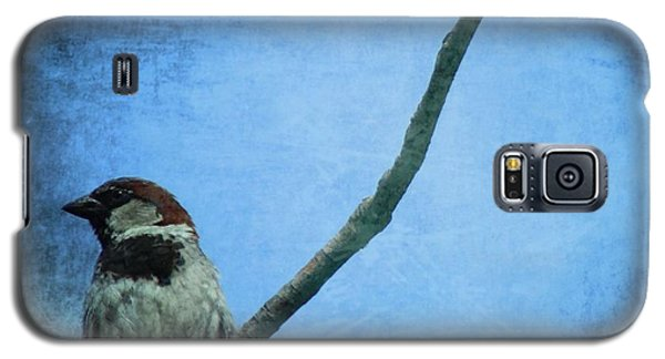 Sparrow On Blue Galaxy S5 Case by Dan Sproul