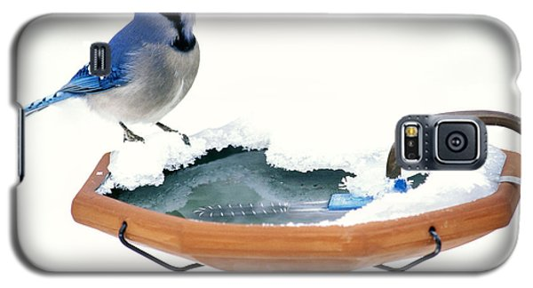Blue Jay At Heated Birdbath Galaxy S5 Case by Steve and Dave Maslowski