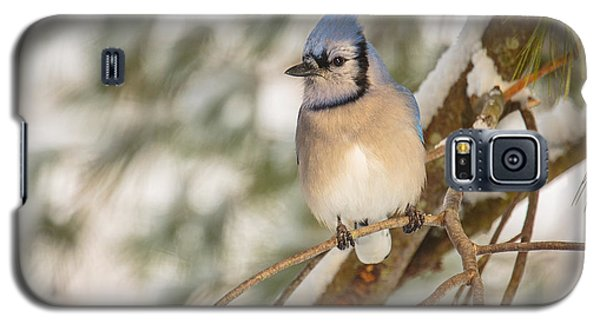 Blue Jay Galaxy S5 Case by Everet Regal