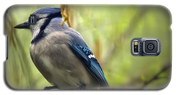 Blue Jay On A Misty Spring Day Galaxy S5 Case by Lois Bryan