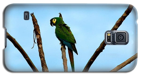 Blue-winged Macaw, Brazil Galaxy S5 Case by Gregory G. Dimijian, M.D.