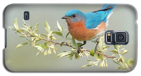 Bluebird Floral Galaxy S5 Case by William Jobes