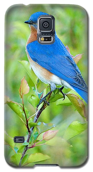 Bluebird Joy Galaxy S5 Case by William Jobes