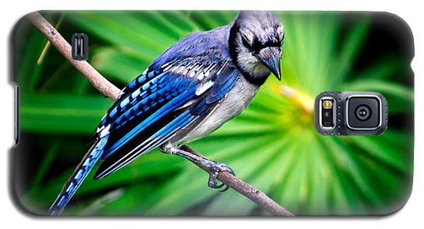 Thoughtful Bluejay Galaxy S5 Case by Mark Andrew Thomas