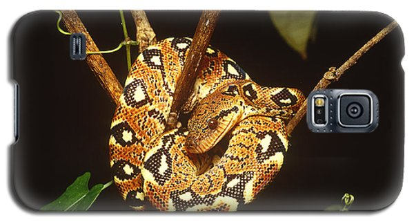 Boa Constrictor Galaxy S5 Case by Art Wolfe