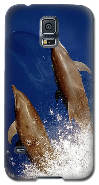 Bottlenose Dolphins Tursiops Truncatus Galaxy S5 Case by Anonymous