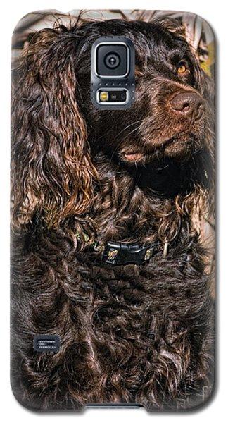 Boykin Spaniel Portrait Galaxy S5 Case by Timothy Flanigan