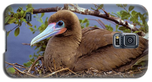 Brown Color Morph Of Red-footed Booby Galaxy S5 Case by Thomas Wiewandt