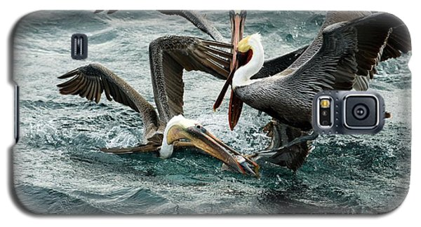 Brown Pelicans Stealing Food Galaxy S5 Case by Christopher Swann
