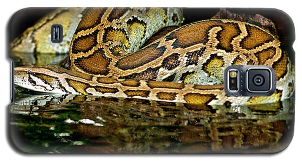 Burmese Python, Python Molurus Galaxy S5 Case by David Northcott