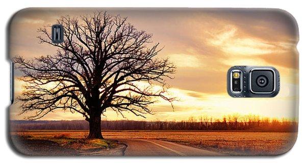 Burr Oak Silhouette Galaxy S5 Case by Cricket Hackmann
