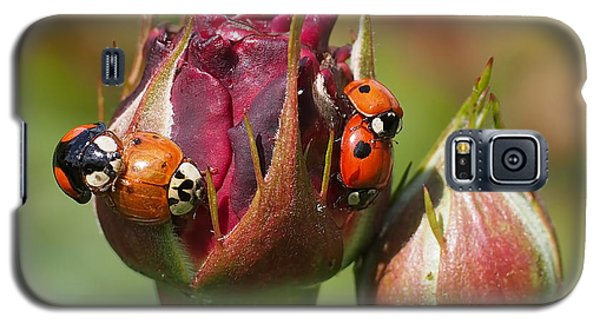 Green Galaxy S5 Cases - Busy Ladybugs Galaxy S5 Case by Rona Black