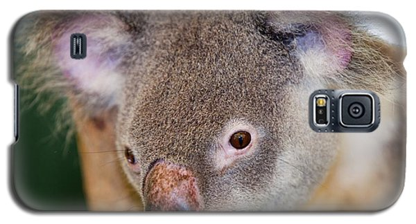 Captive Koala Bear Galaxy S5 Case by Ashley Cooper