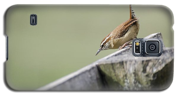 Carolina Wren Two Galaxy S5 Case by Heather Applegate