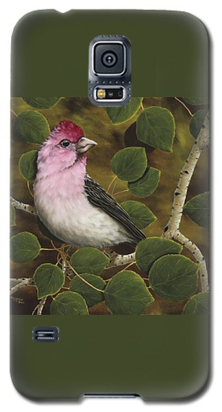 Cassins Finch Galaxy S5 Case by Rick Bainbridge