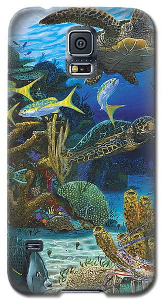Cayman Turtles Re0010 Galaxy S5 Case by Carey Chen