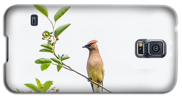 Cedar Waxwing Galaxy S5 Case by Kathy Schreiber-Castrataro