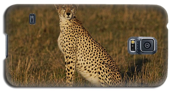 Cheetah On Savanna Masai Mara Kenya Galaxy S5 Case by Hiroya Minakuchi