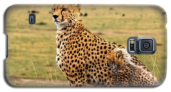 Cheetahs Galaxy S5 Case by Babak Tafreshi