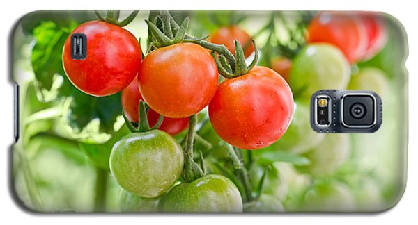 Cherry Tomatoes Galaxy S5 Case by Delphimages Photo Creations