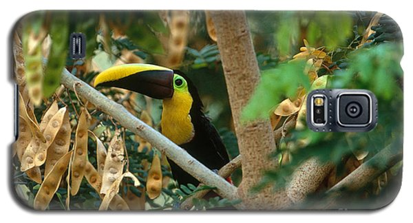 Chestnut-mandibled Toucan Galaxy S5 Case by Art Wolfe