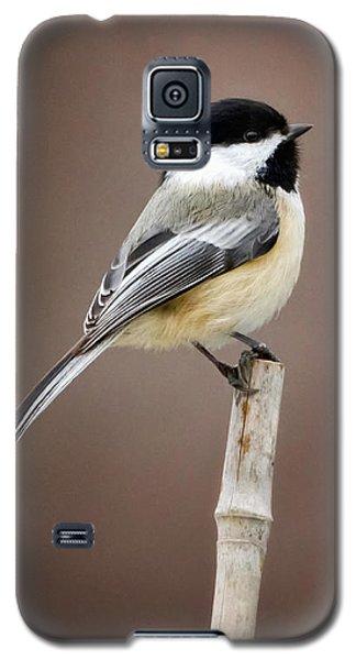 Chickadee Galaxy S5 Case by Bill Wakeley