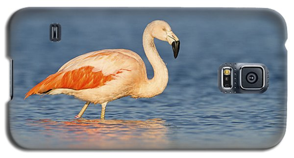 Chilean Flamingo Galaxy S5 Case by Ronald Kamphius