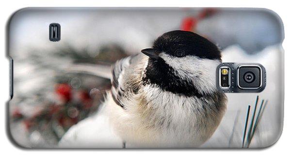 Chilly Chickadee Galaxy S5 Case by Christina Rollo