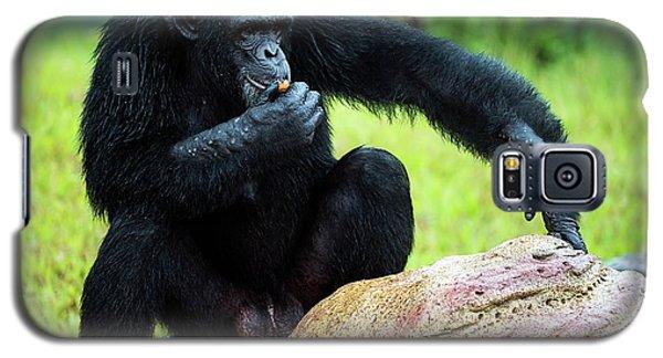 Chimpanzees Galaxy S5 Case by Pan Xunbin