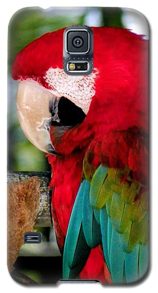 Chowtime Galaxy S5 Case by Karen Wiles