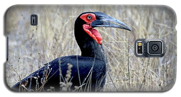 Close-up Of A Ground Hornbill, Kruger Galaxy S5 Case by Miva Stock