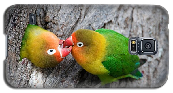 Close-up Of A Pair Of Lovebirds, Ndutu Galaxy S5 Case by Panoramic Images