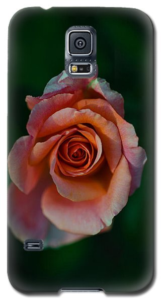 Close-up Of A Pink Rose, Beverly Hills Galaxy S5 Case by Panoramic Images