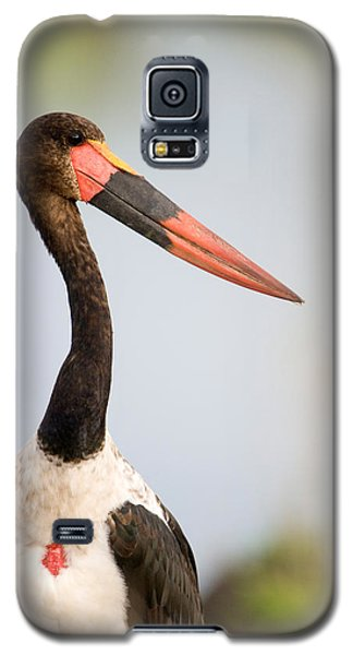 Close-up Of A Saddle Billed Stork Galaxy S5 Case by Panoramic Images