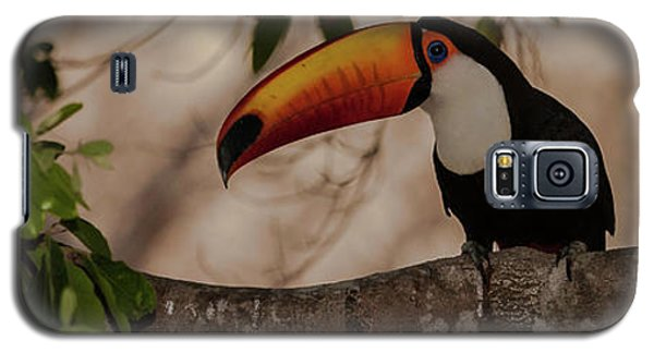 Close-up Of Tocu Toucan Ramphastos Toco Galaxy S5 Case by Panoramic Images