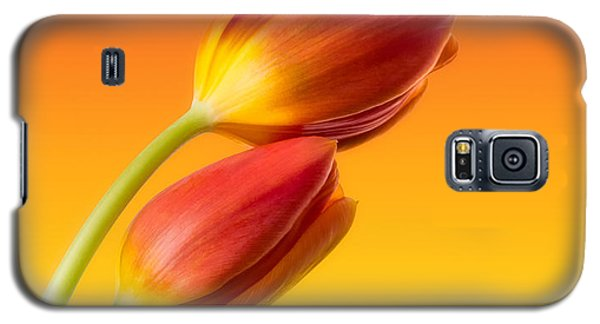 Floral Galaxy S5 Cases - Colorful Tulips Galaxy S5 Case by Wim Lanclus