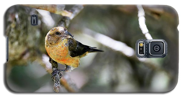 Common Crossbill Female Galaxy S5 Case by Dr P. Marazzi