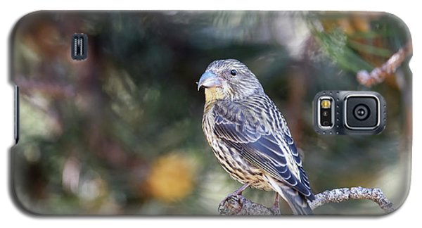 Common Crossbill Juvenile Galaxy S5 Case by Dr P. Marazzi
