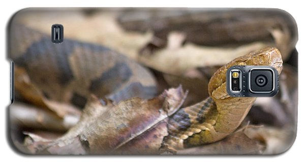 Copperhead In The Wild Galaxy S5 Case by Betsy Knapp